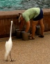 Sea World Orlando's dolphin trainer prepares the food at Dolphin Cove for the dolphins' mid-day feeding. Credit: Erin Nicholson