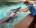 Dolphin trainer Casey Bell's job is to increase the dolphins' energy so they participate in tricks for the crowd. Credit: Erin Nicholson